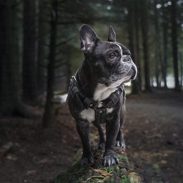 Allevare un cane cucciolo: 5 consigli utili da adottare